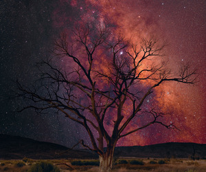 sky, stars, and tree image