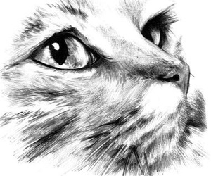 cat and draw image