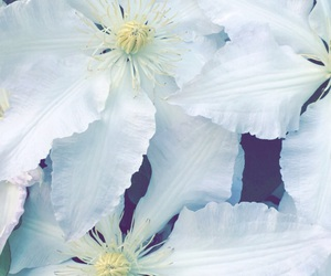 background, white, and flower image