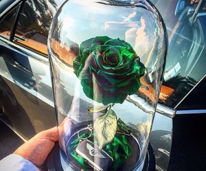 rose, flowers, and green image