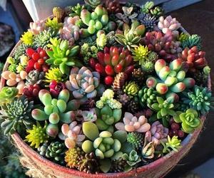 cactus, plants, and succulents image