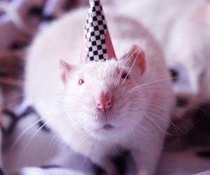 aniversario, Beethoven, and birthday image