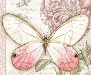 butterfly, girly, and pink image