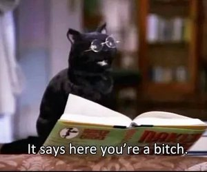 cat, funny, and salem image