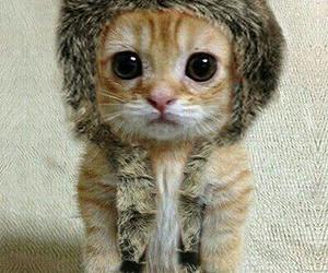 cat, so cute, and cute image