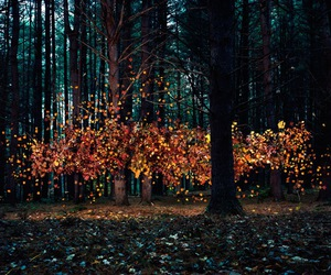 art, fall, and forest image