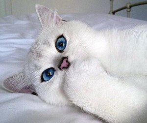 amazing, blue, and eyes image