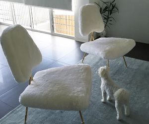chair, dog, and white image