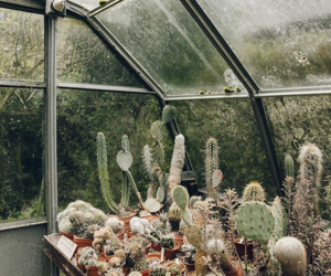 cacti, cactus, and greenhouse image
