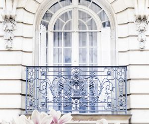 flowers, white, and paris image