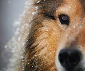 dog, snow, and animal image
