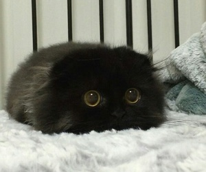 adorable, black kitten, and cute image