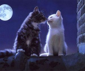 cat, kitten, and kiss image