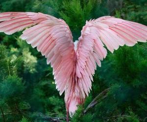 pink, bird, and nature image