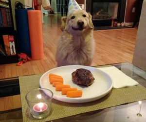 birthday, breed, and food image