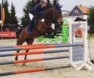 equestrian, horse, and springen image