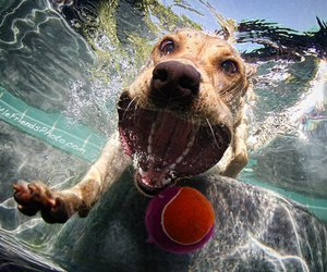 dog, water, and ball image