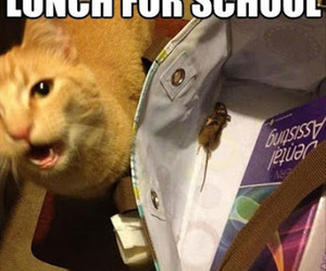 cat, funny, and lunch image