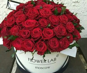 flower, for you, and red rose image