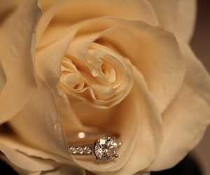 proposal, ring, and rose image