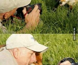fox, animal, and funny image