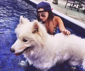 dog, girl, and pool image