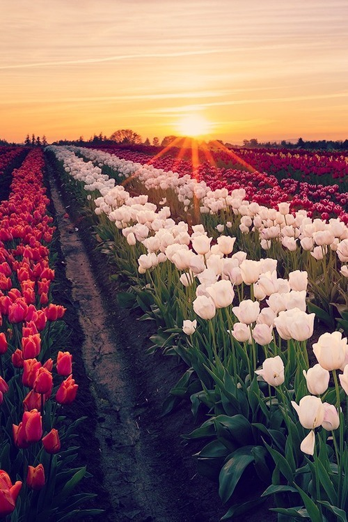 flowers, beautiful, and sun image