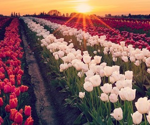 flowers, beautiful, and sunset image