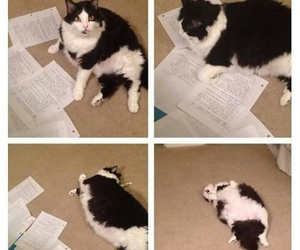 funny, school, and cat image