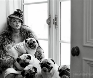 dogs, pug, and vogue image
