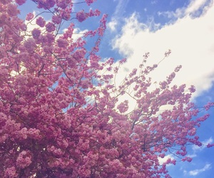 background, blossom, and nature image