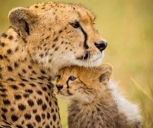 animal and sweet image