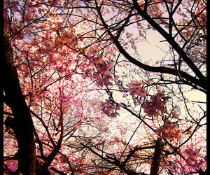 pink and sakura tree image
