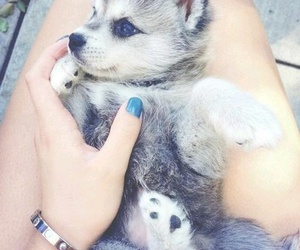 chien, dog, and cute image