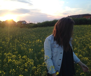 beautiful, flower, and flower field image