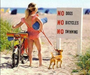 dog, beach, and bicycle image