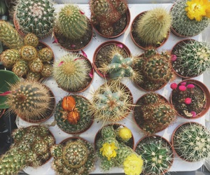 cactus, cactuses, and colorful image