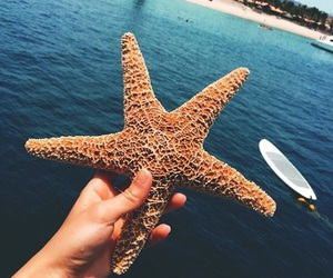 ocean, sea, and starfish image