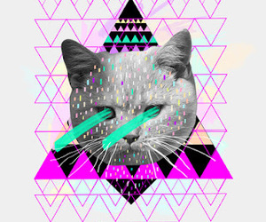 cat, triangle, and hipster image