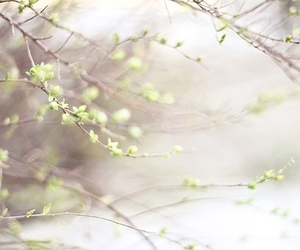 green and spring image