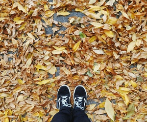 autumn, shoes, and weather image