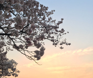 sky, flowers, and nature image