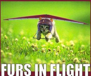 airplane, flying cat, and cat image