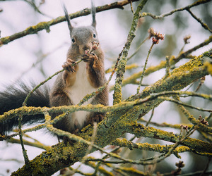 branch, germany, and squirrel image
