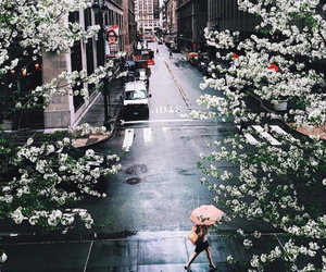 city, flowers, and street image