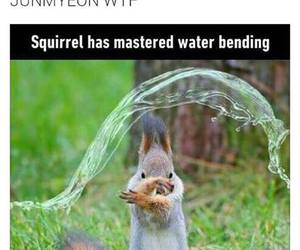 funny, squirrel, and lol image