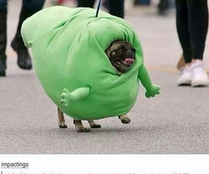 dog, funny, and tumblr image