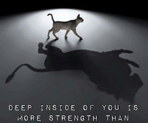 quotes and cat image