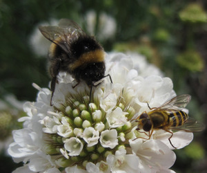 flowers, nature, and bee image