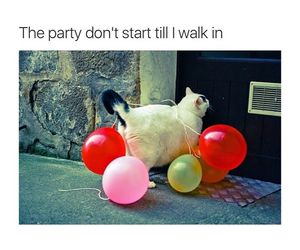 funny, party, and cat image